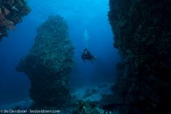 BD-120421-St-Johns-5944-Homo-sapiens.-Linnaeus.-1758-[Diver].jpg
